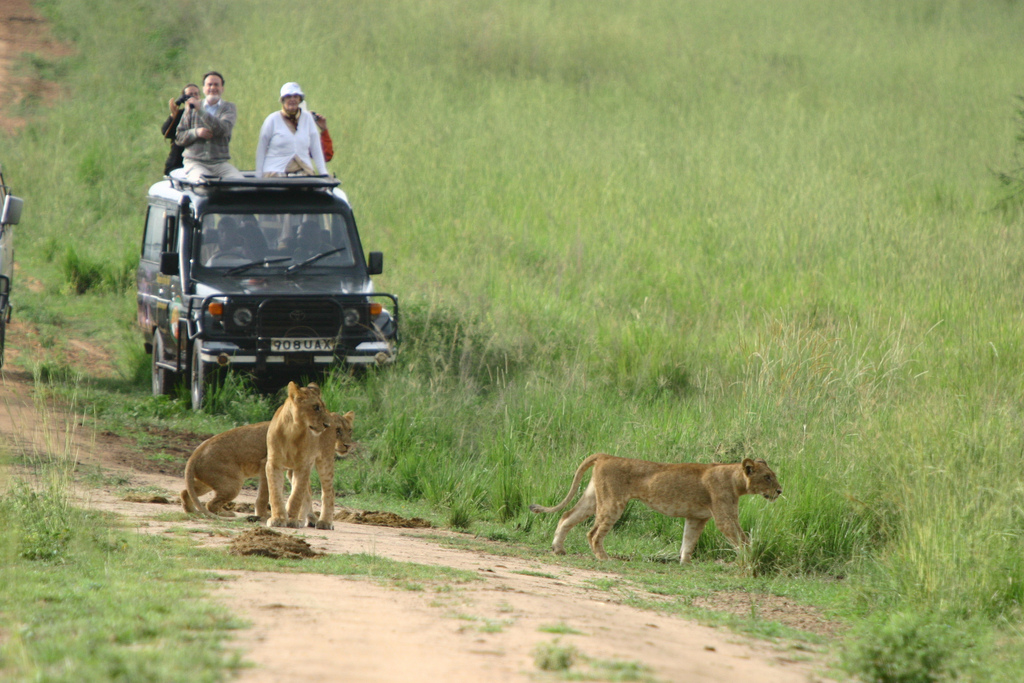 One day Akagera National Game Park
