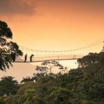 Self Drive to Nyungwe Canopy Walk